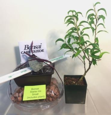 Bonsai Starter Kit - Small